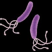 virus_pylori_pirorikin.pngピロリ菌