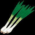 vegetable_wakegi-png%e3%83%8d%e3%82%ae