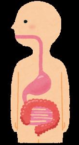 body_syokudou_i_chou.png胃腸