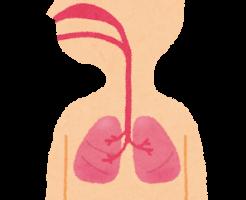 body_hai_jintai.png肺